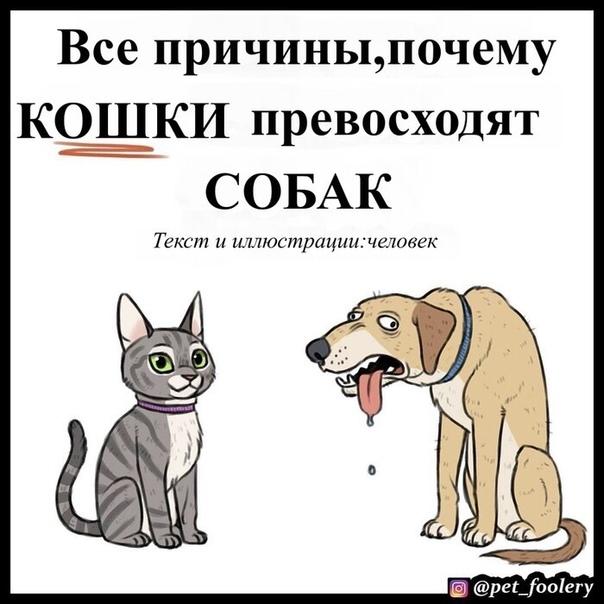 Почему собака не любит кошку – 5 основных причин враждебного отношения