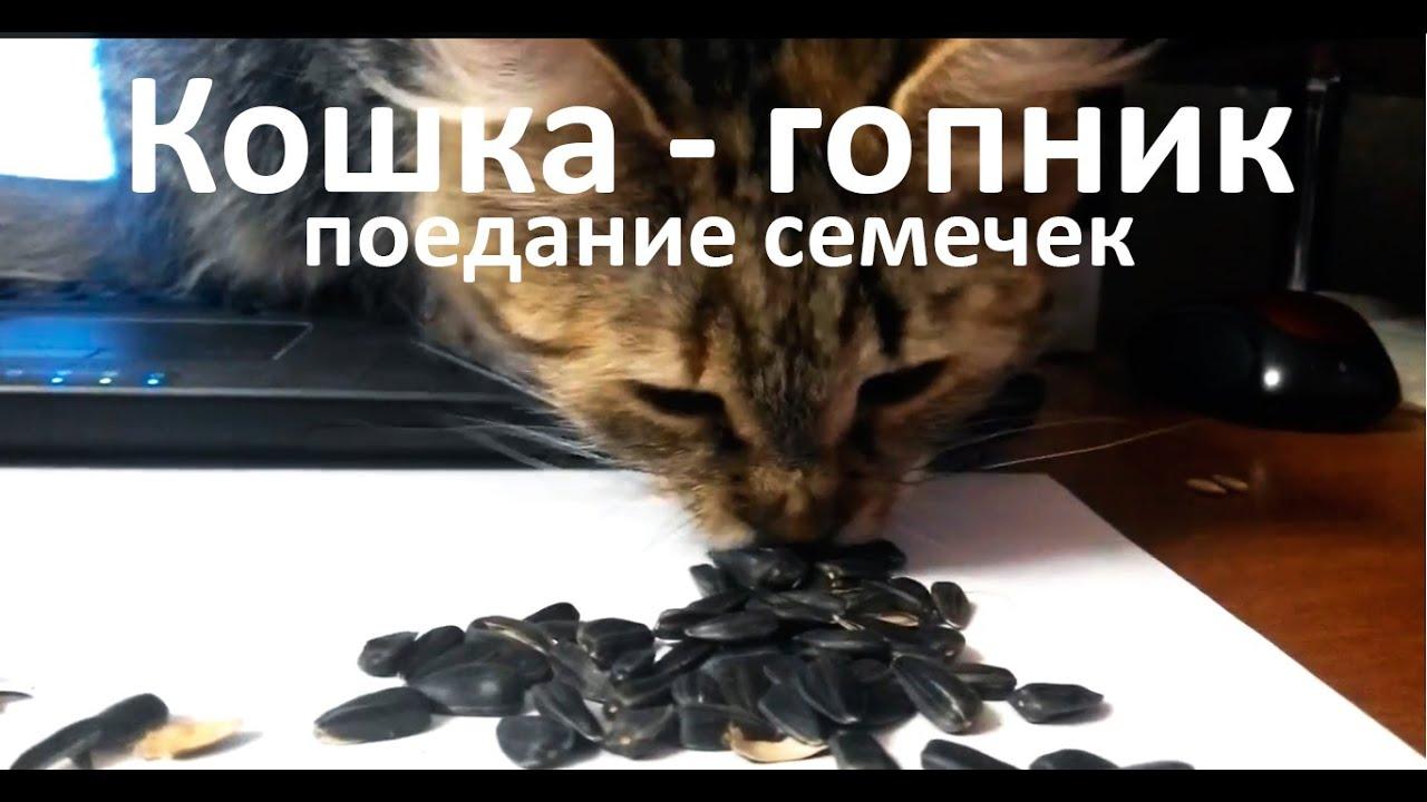 Можно ли котам семечки: тыквенные, подсолнечника