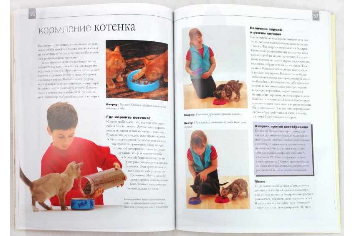 Как воспитывать котёнка: советы и рекомендации по воспитанию от владельцев и ветеринаров