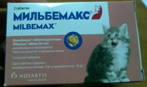 Можно ли коту давать антибиотики для людей