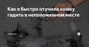 Как отучить кота гадить где попало: эффективные методы