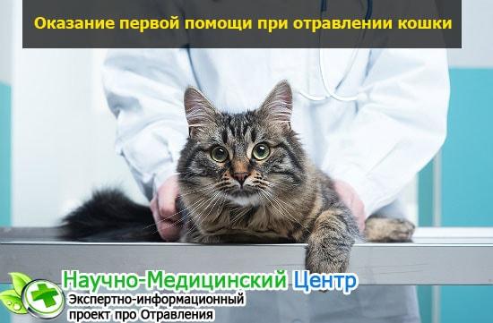 Что делать, если кот отравился: возможные симптомы и лечение в домашних условиях