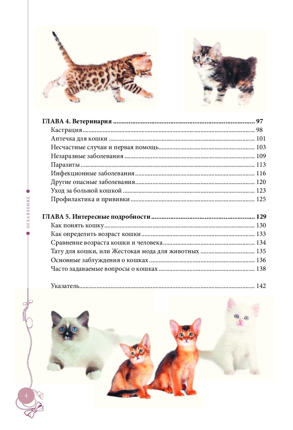 Как определить возраст котёнка без помощи специалистов?
