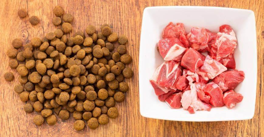 Рецепты натурального домашнего корма для кошек