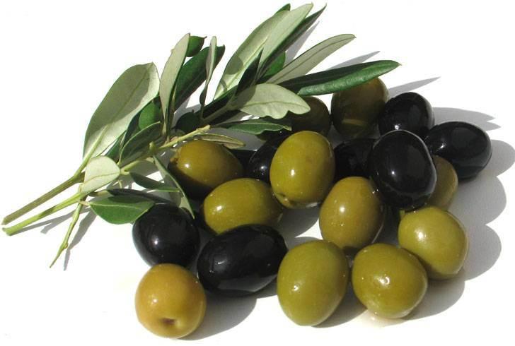 Почему коты любят оливки?