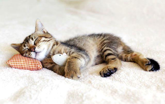 Частое дыхание у кошки: причины и экстренная помощь