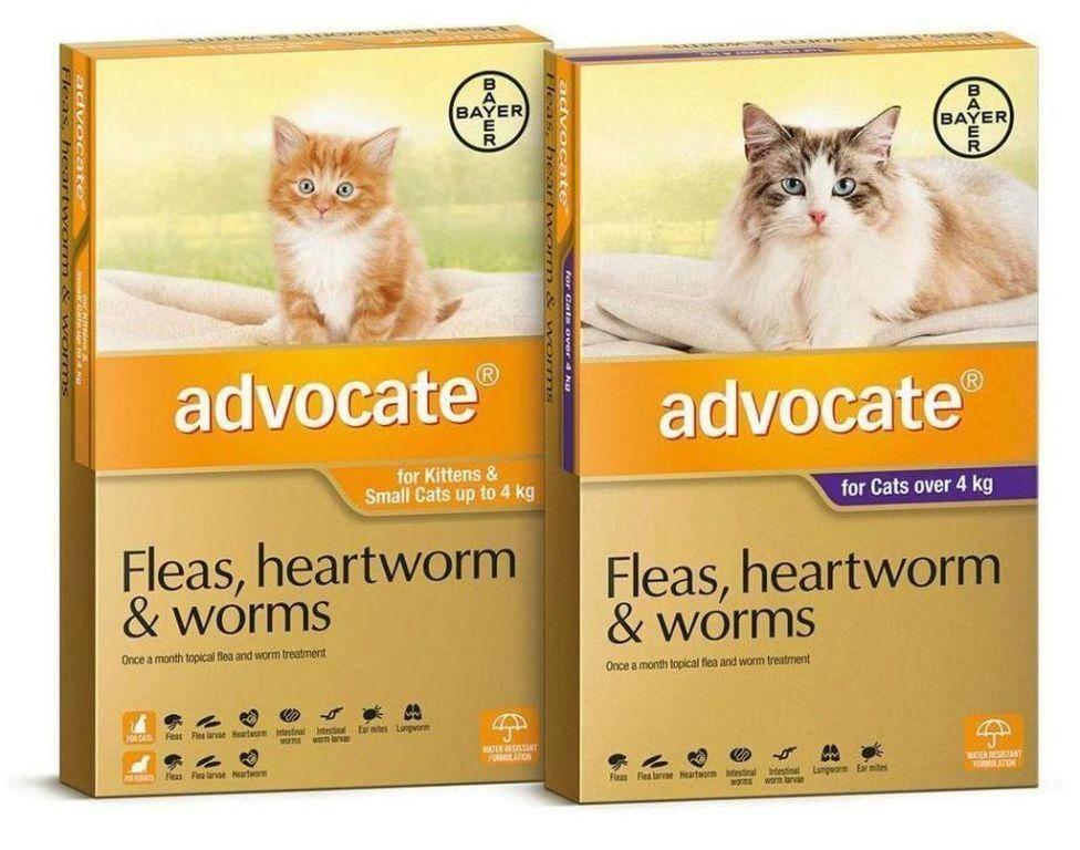Advocate для кошек: аналог, применение, состав