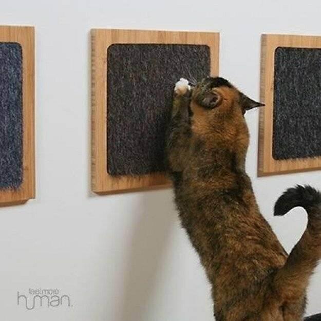 Все лайфхаки для котов в одной статье.