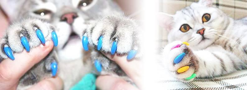 Антицарапки для кошек: отзывы ветеринаров об изделиях