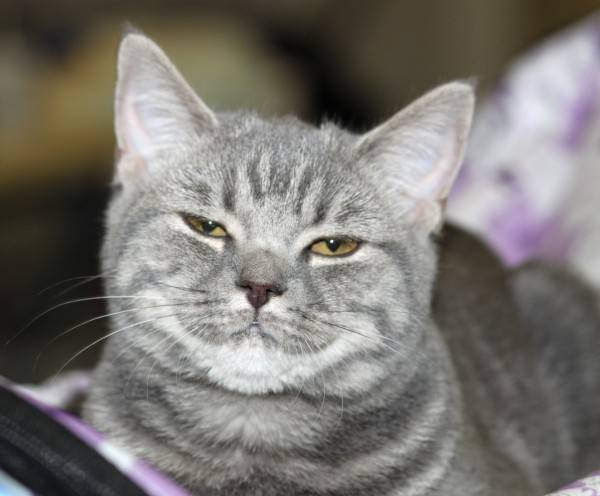 Что означает, если кошка щурит один глаз?