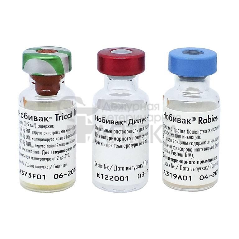 Вакцина от инфекций «нобивак» — надёжная защита для котов и кошек