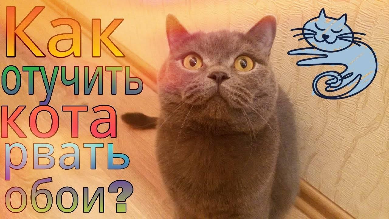 Кошка дерет обои и мебель: как ее отучить?