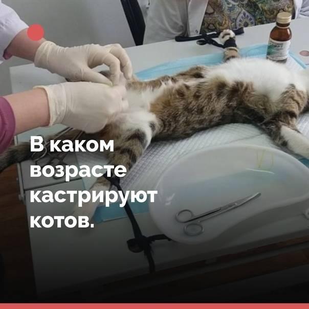 В каком возрасте можно стерилизовать кошку: советы ветеринаров