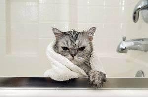 Как купать котенка: советы и рекомендации