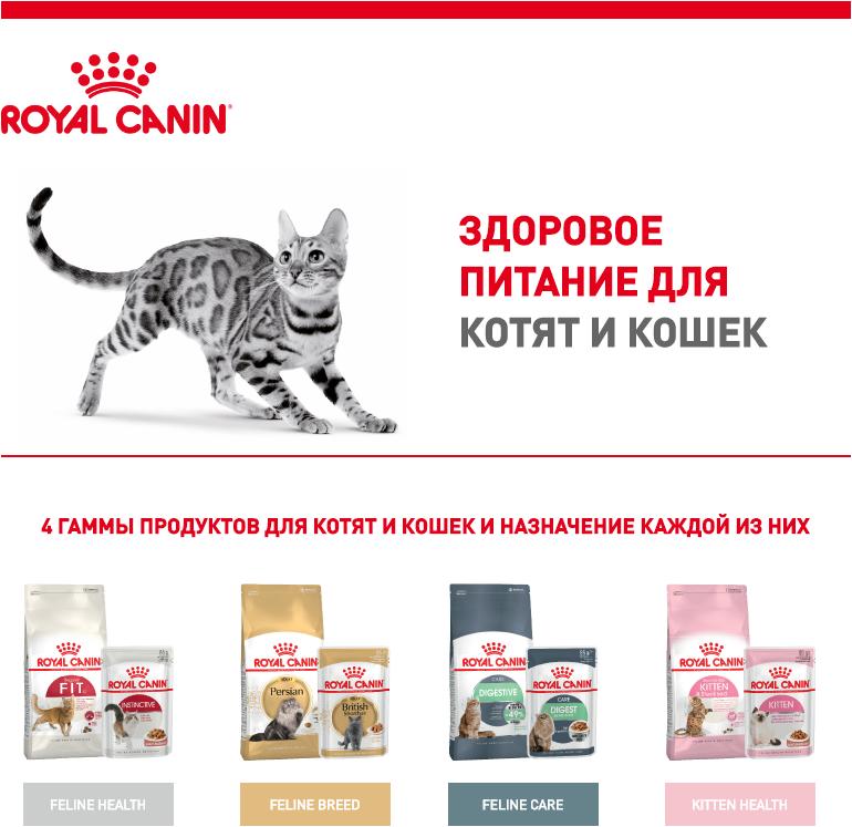 Рейтинг кормов для кошек влажных и сухих