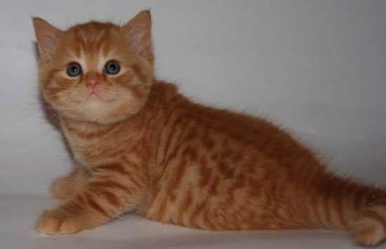 Как определить пол котенка: все возможные методы