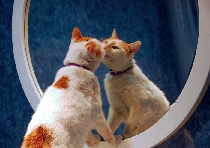 Что кошка видит в зеркале