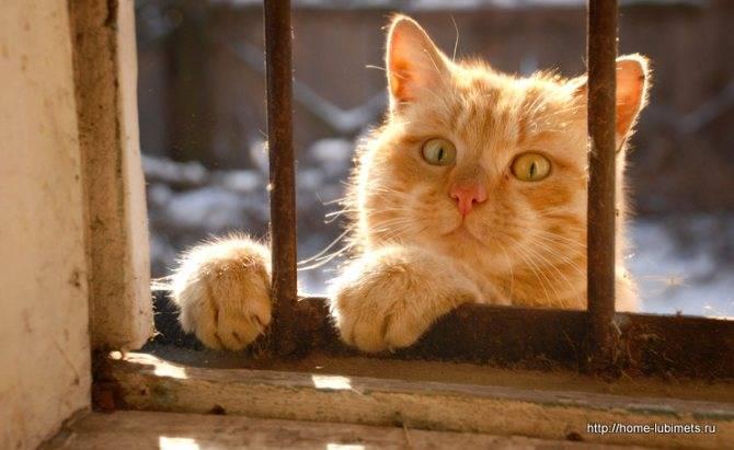 Нужен ли рыжий кот в доме