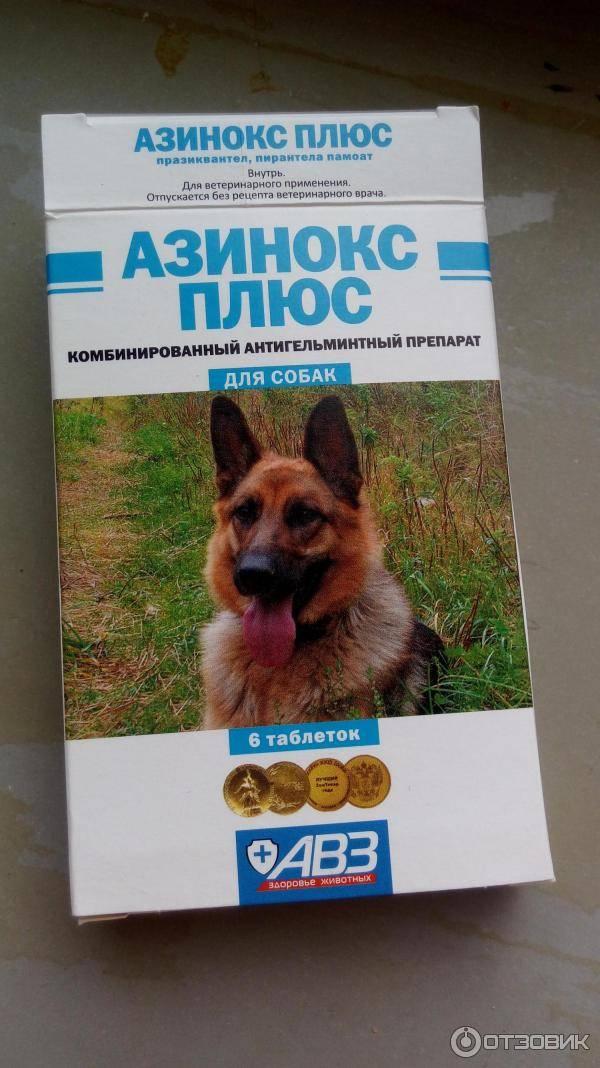 Обзор ветеринарного препарата: азинокс для кошек