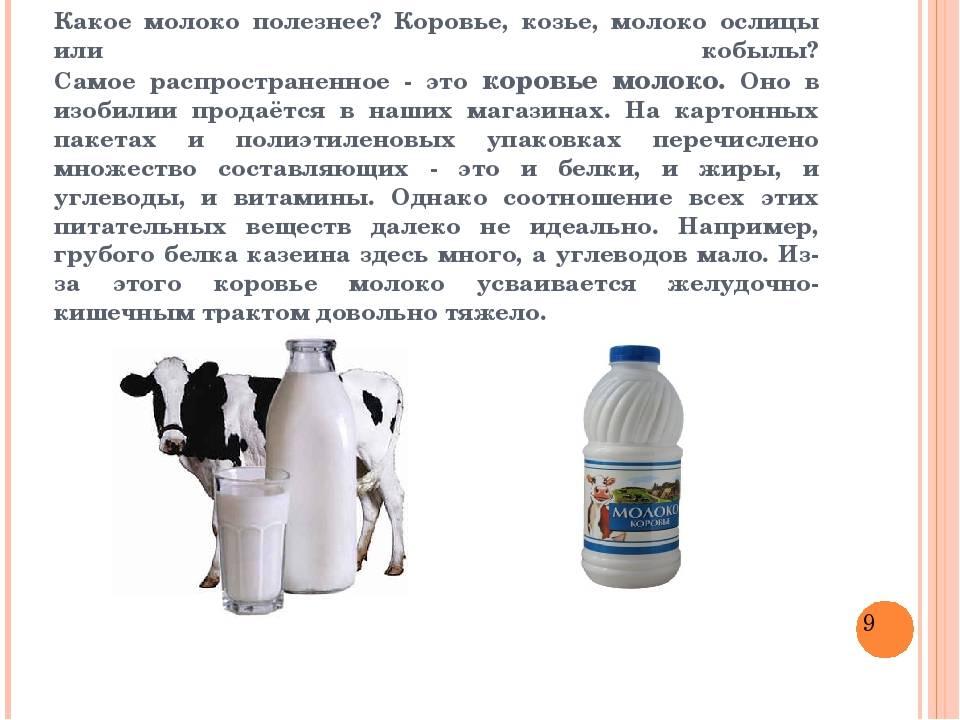 Можно ли давать молоко и кисломолочные продукты кошкам и котятам