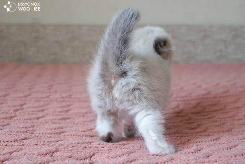 Кошка после родов - ветеринарная клиника vetstate