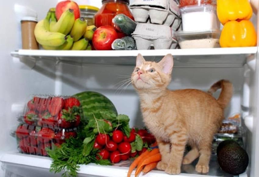 Можно ли котам давать овощи