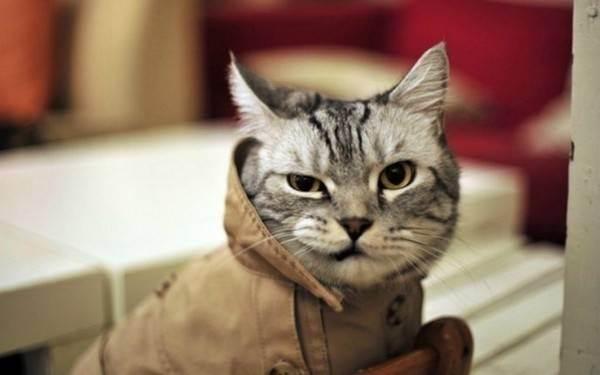 Тест «какая ты кошка»: раскроет твои тайные черты характера