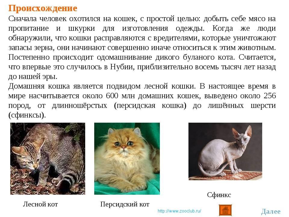 Откуда и от кого появились кошки на земле. кошки в китае и японии: история любви самая 1 кошка на земле