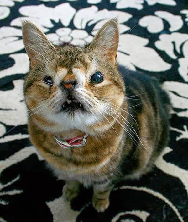 Беспородная кошка: особенности самой большой группы мурлыкающих животных