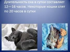 Кошка постоянно спит, почему коты много спят