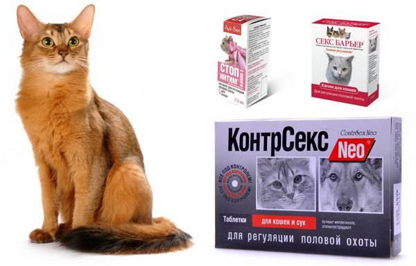 Антисекс для кошек: разновидности эффективных препаратов
