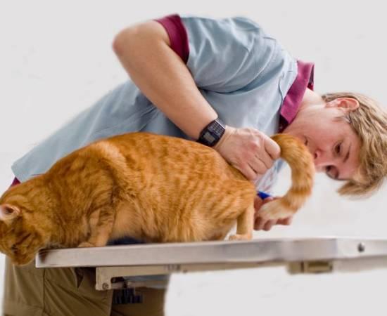 Мочекаменная болезнь у кошки. 13 симптомов для проверки