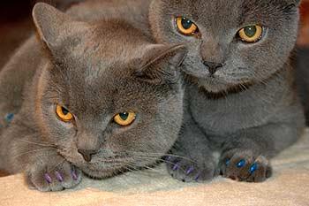 Силиконовые накладки на когти кошек: сколько стоят