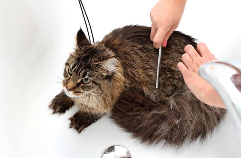 Шерсть в желудке у кошки лечение