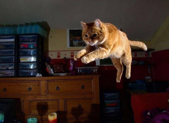 Почему кот орет по ночам и что при этом делать?
