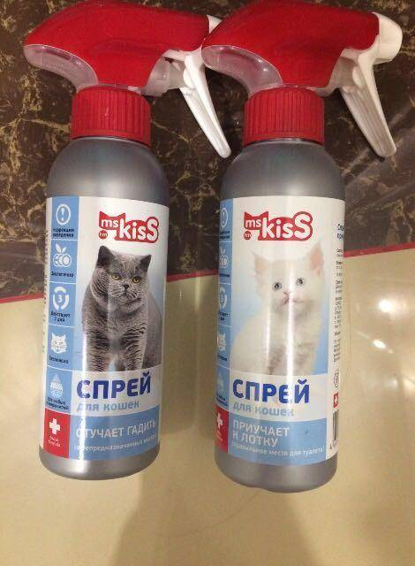 Как приучить котенка к лотку – советы ветеринара | megapoisk.com