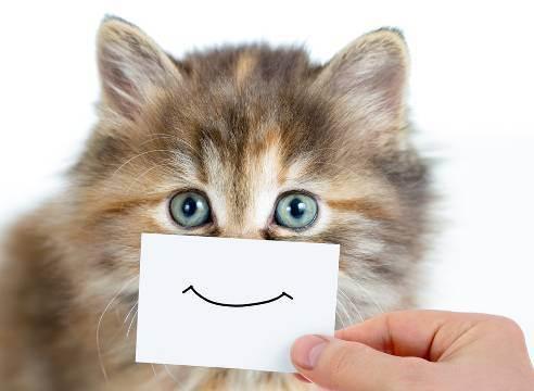 Трава кошачья мята — как выглядит, где растет и для чего она нужна?