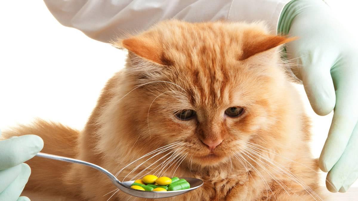 Простуда у кошек: как проявляется, и как её лечить. всё что нужно знать про простуды у кошек: симптомы, лечения.