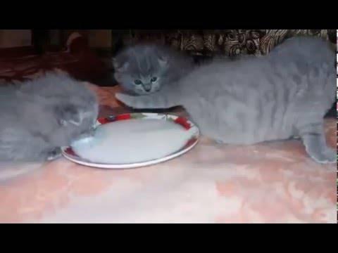 Когда котята начинают есть самостоятельно?