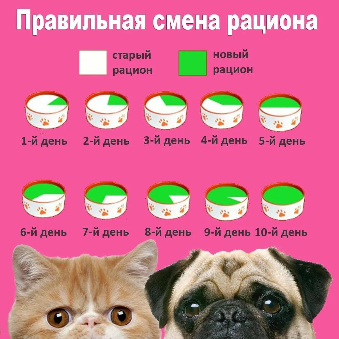 Как приучить кошку к сухому корму? как перевести кота с натуральной пищи и влажного корма на сухой? распространенные ошибки