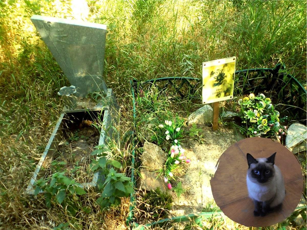 Как похоронить кошку: места и способы