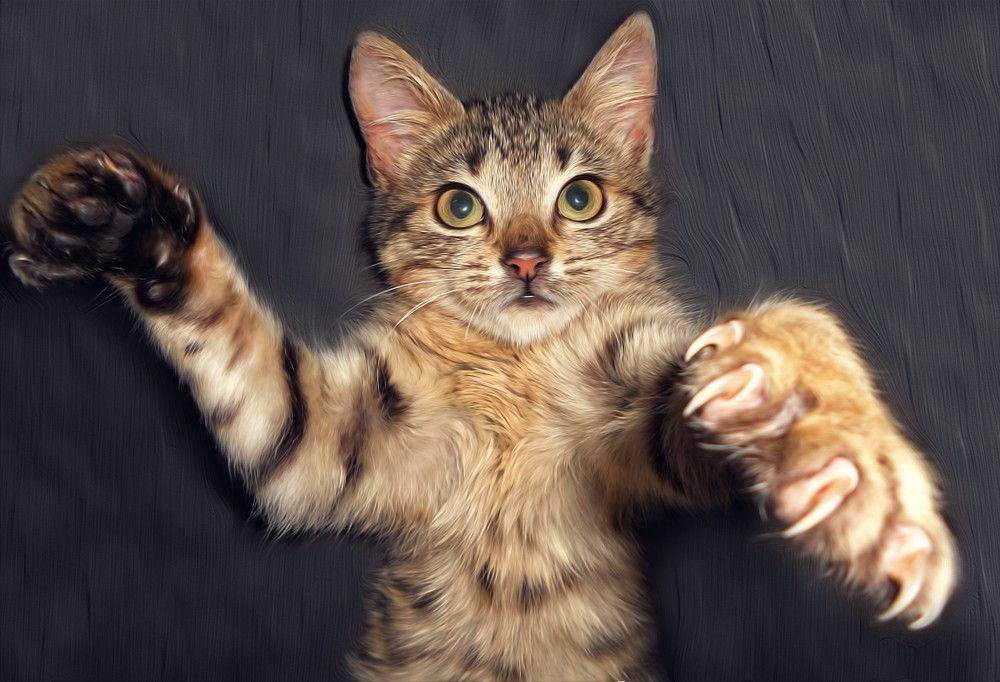 Как отучить кота кусаться  причины и способы отучения