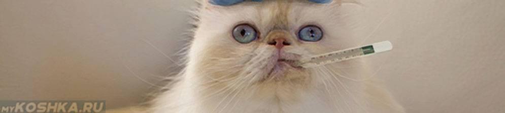 Как лечить кошку от простуды? советы ветеринара