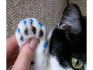 """Удаление когтей у кошки или онихэктомия: все """"за"""" и """"против"""""""