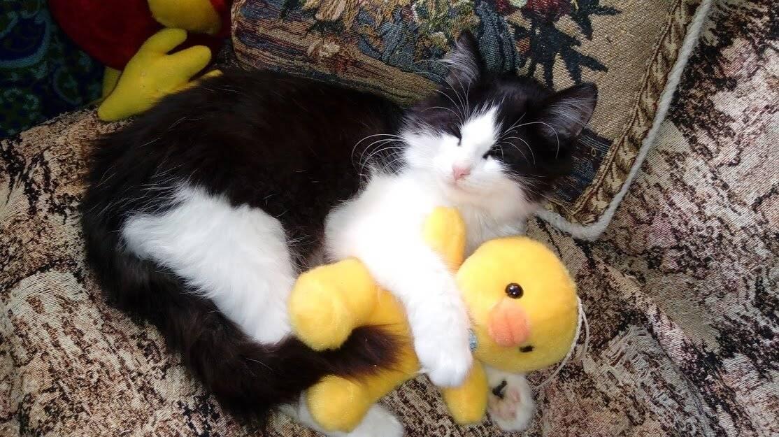 Первые дни котёнка в новом доме | энциклопедия домашних животных