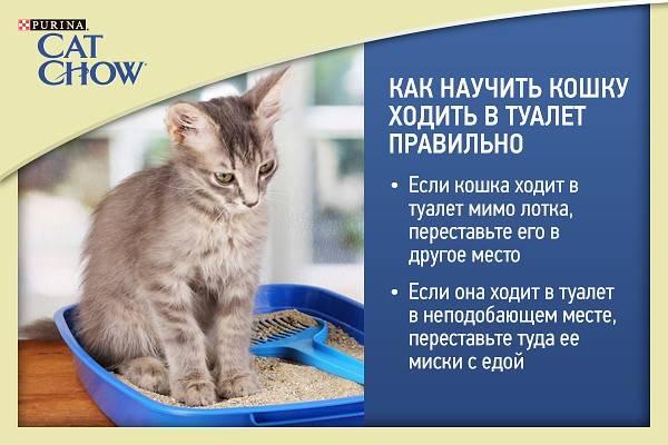 Как приучить котенка ходить в лоток и отбить желание гадить