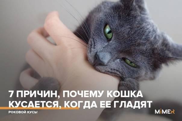 Почему кошка кусает руку, когда ее гладишь