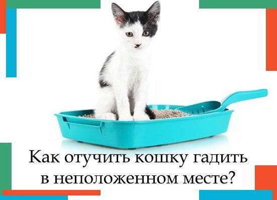 Кошка писает на кровать – почему она это делает, как отучить животное?
