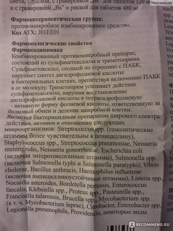 Бисептол для собак: назначение, применение - oozoo.ru
