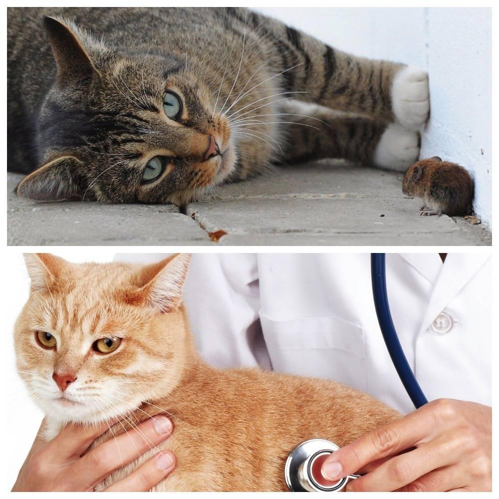 Как передается токсоплазмоз, можно ли избежать заболевания, если в доме живет кошка